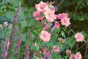 frontpage_eigen tuin